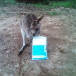 A friend at the Shoeboxed Australia office!