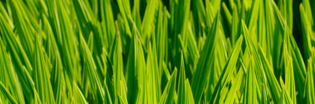 How to Give Your Small Business a Green Beginning