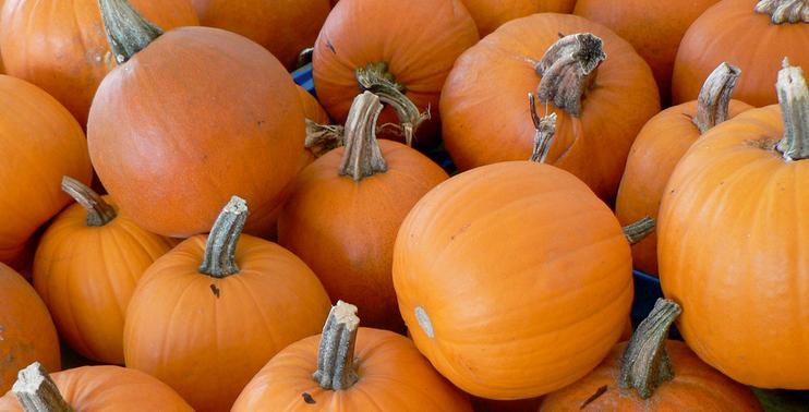 Shoeboxed Shenanigans: Smashing Pumpkins Edition