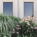 Boost Your Employees' Productivity – 7 Ways to Introduce Biophilic Designs In Your Workplace